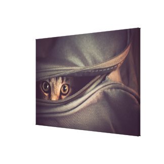 Young Tabby Kitten Looking Out From Zip Up Bag Canvas Print