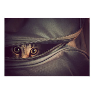 Young Tabby Kitten Looking Out From Zip Up Bag Poster