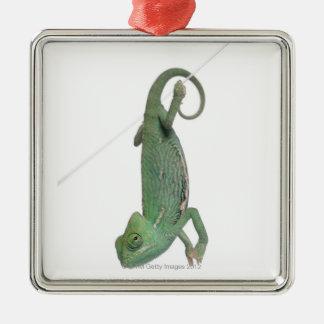Young veiled chameleon, Chamaeleo calyptratus Christmas Ornament