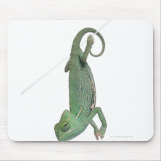 Young veiled chameleon, Chamaeleo calyptratus Mouse Mat