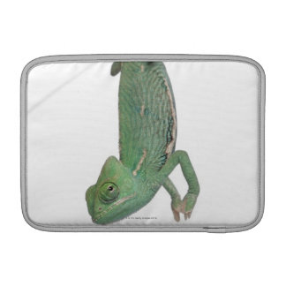 Young veiled chameleon, Chamaeleo calyptratus Sleeve For MacBook Air