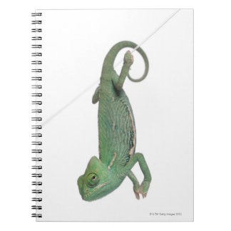 Young veiled chameleon, Chamaeleo calyptratus Spiral Notebook