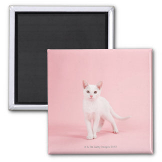 Young white cat square magnet