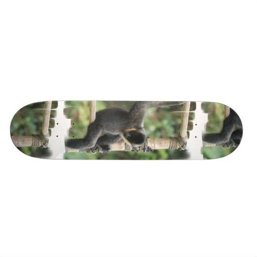 Young White Cheeked Capuchin Monkey Skateboard