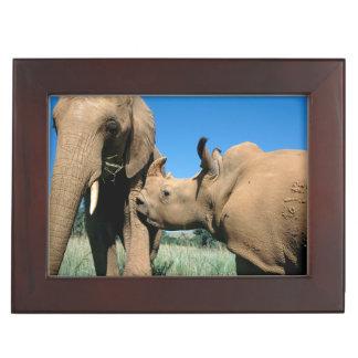 Young White Rhinoceros Keepsake Box