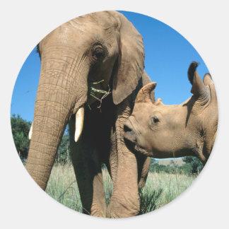 Young White Rhinoceros Round Sticker