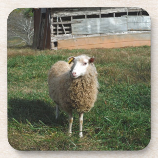 Young White Sheep on the Farm Drink Coaster