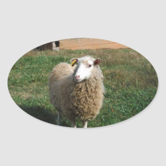 Young White Sheep on the Farm Oval Sticker