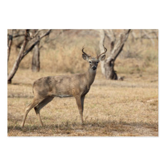 Young Whitetail Deer Business Card