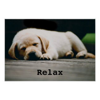 Young Yellow Labrador Puppy Sleeps Soundly Poster