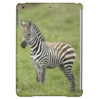 Young Zebra In The Serengeti Plain
