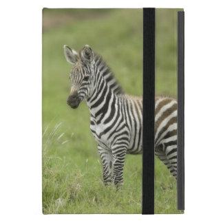 Young Zebra In The Serengeti Plain Cover For iPad Mini