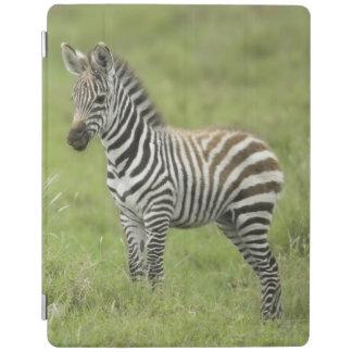 Young Zebra In The Serengeti Plain iPad Cover