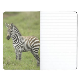 Young Zebra In The Serengeti Plain Journal