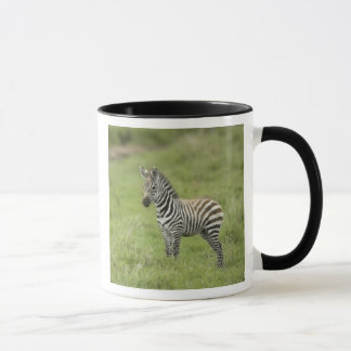 Young Zebra In The Serengeti Plain Mug
