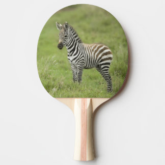 Young Zebra In The Serengeti Plain Ping Pong Paddle