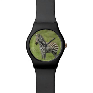 Young Zebra In The Serengeti Plain Wrist Watch