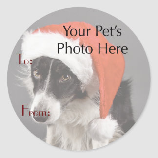 Your Pet's Photo on Christmas Name Tags Round Sticker