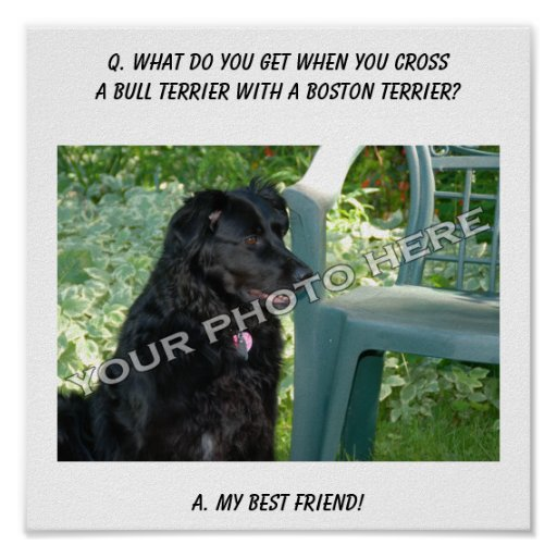 Your Photo Here! My Best Friend Bull Terrier Mix Posters
