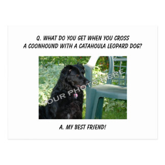 Your Photo Here! My Best Friend Coonhound Mix Postcard