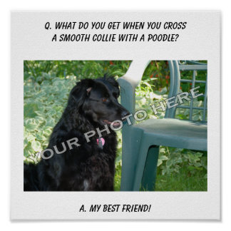 Your Photo Here My Best Friend Smooth Collie Mix Print