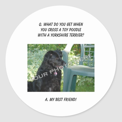 Your Photo Here! My Best Friend Toy Poodle Mix Round Sticker