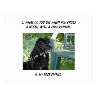 Your Photo Here! My Best Friend Westie Mix Postcard
