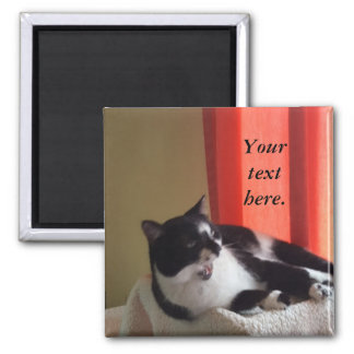 Your Text Words Tuxedo Cat Photo Magnets