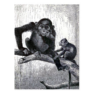 """Youth and Experience"" Vintage Monkey Illustration Postcard"