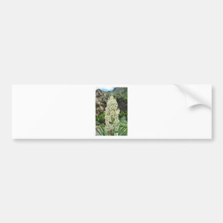 Yucca flowers in the Azores. Bumper Sticker