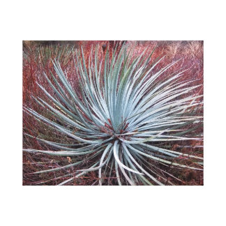 Yucca in the Desert Canvas Print