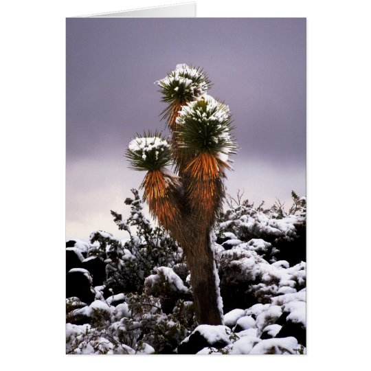 Yucca in the Snow, Black Mountain Henderson Nevada Card
