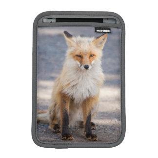 Yukon, Johnson's Crossing, Canada. Habituated 1 2 iPad Mini Sleeves