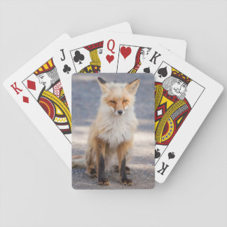 Yukon, Johnson's Crossing, Canada. Habituated 1 2 Playing Cards