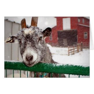 Yule Goat Card