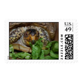 Yummy Lettuce Turtle Postage