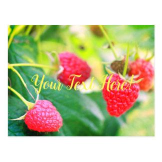 Yummy Red Green Strawberries Postcard Card
