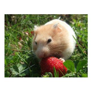 Yummy Strawberry Hammie Postcard