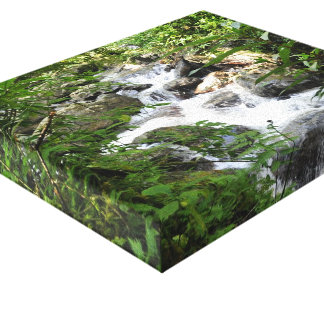 Yunque Rain Forest, Puerto Rico Stretched Canvas Prints