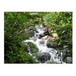 Yunque Rain Forest, Puerto Rico Postcard
