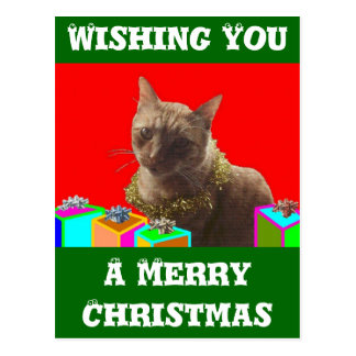 Zack The Xmas Cat Postcard