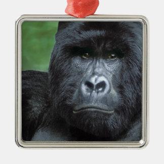 Zaire, Virungas National Park. Portrait of Silver-Colored Square Decoration