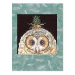 Zane (owlet w jack pine) postcard