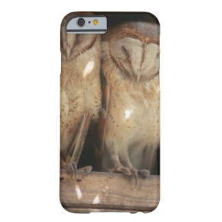 Zanzibar, Tanzania, East Africa Barely There iPhone 6 Case