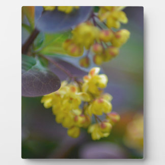 zazzle-pattern-leave plaque