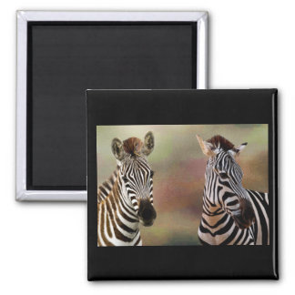 Zazzling Zebras Square Magnet