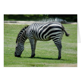 zebra-2-7 greeting card