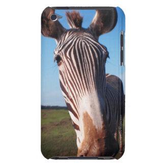 zebra 2 iPod touch cases