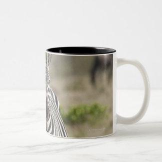 Zebra 2 Two-Tone coffee mug