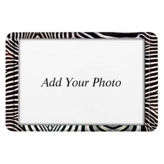 Zebra 3 magnet